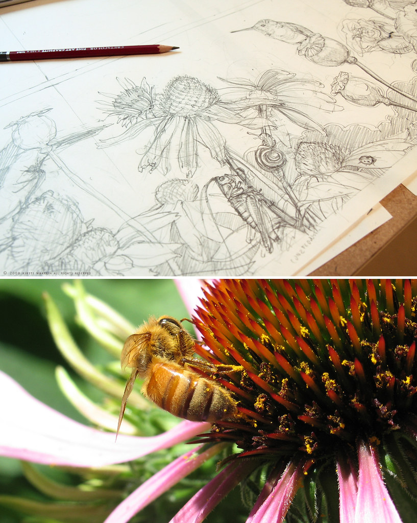 Insects and Coneflowers