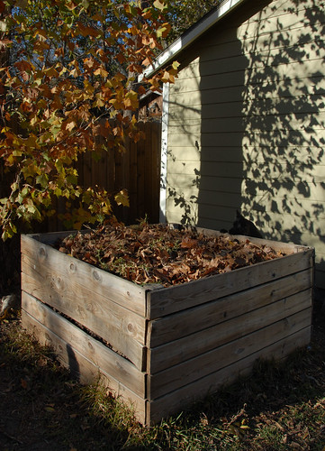 pea investigating compost
