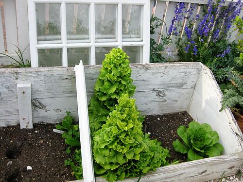 Williamsburg gardens window greenhouse