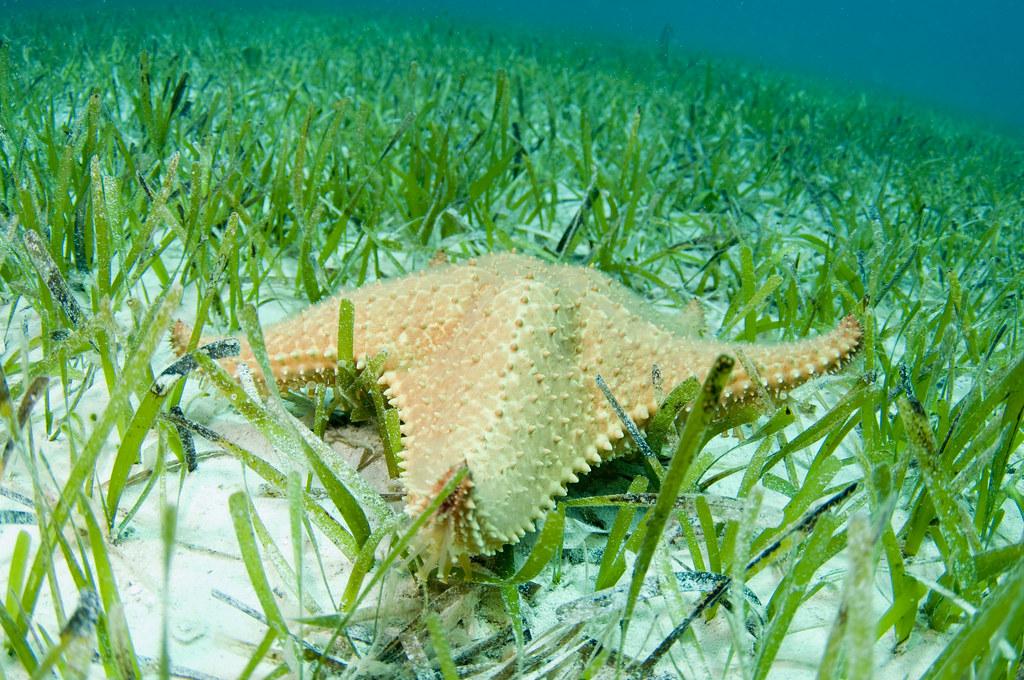 Starfish on the grass