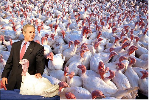 How Many Turkeys Will He Pardon?