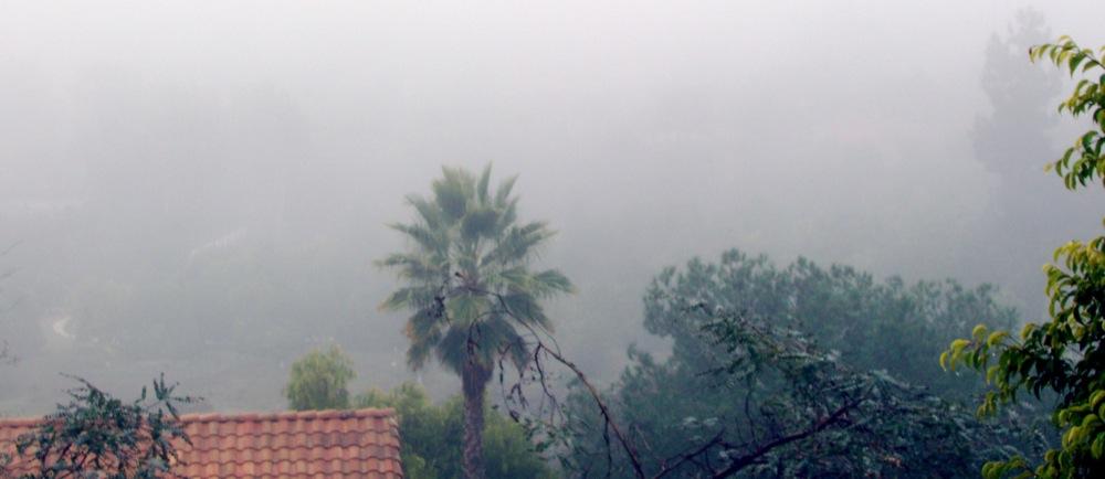 fog_2jan2009.jpg