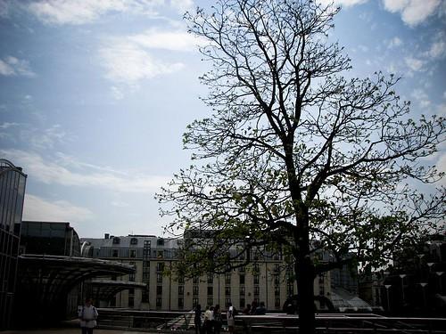 푸른 잎이 돋아 있는 나무 사진