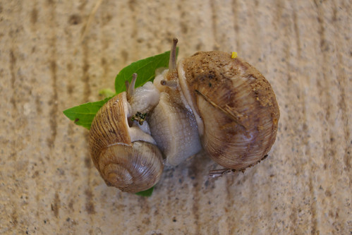 Smooching Snails by you.