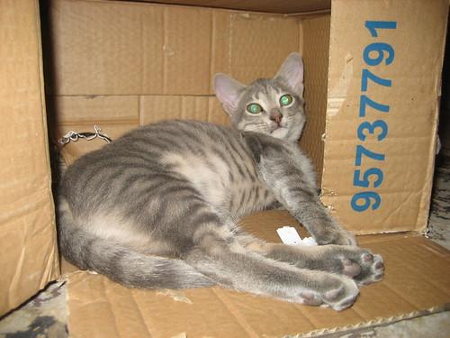 Zuzu in a box