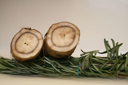 Cross section of burdock root