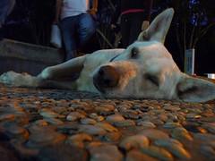 Dog is sleepy from quantum physics class