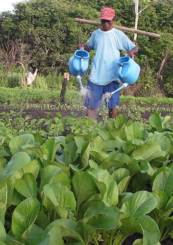 Vitalis, warga Bomaki, Kepulauan Tanimbar, Maluku menghidupi keluarganya dari bertani sayuran.