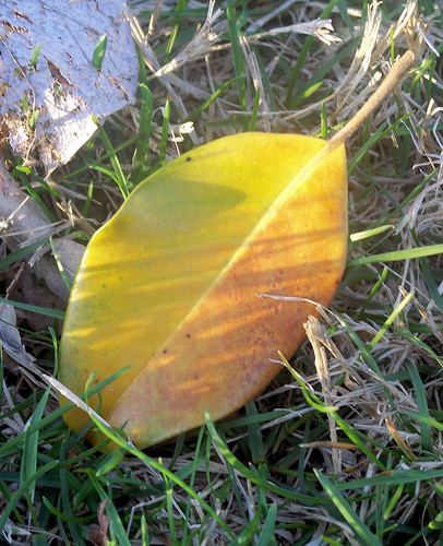 nice colored leaf.jpg