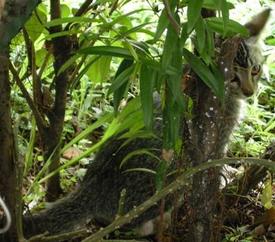 BambiBaby_hiding_20081122_05x