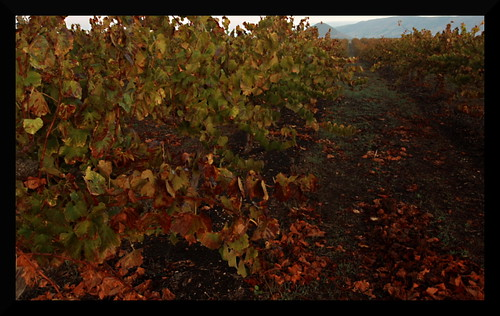 vineyards7edit