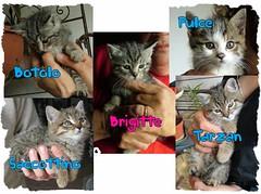 Tarzan, Saccottino, Brigitte, Botolo e Pulce