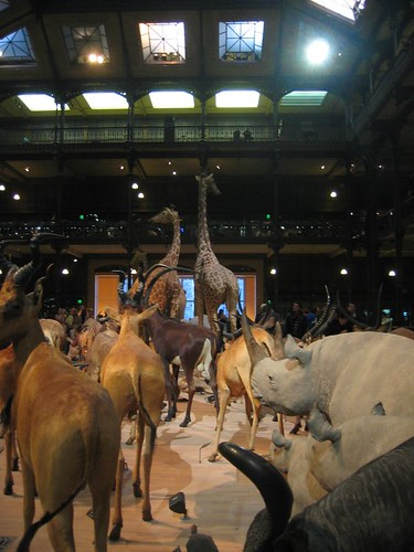 Parade of taxidermies at the Grande Galerie de l'Évolution.