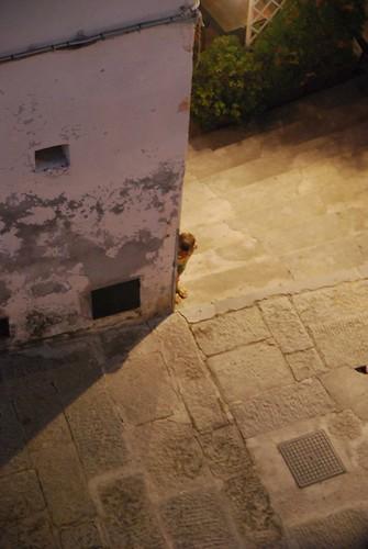 Capolino a Capoliveri