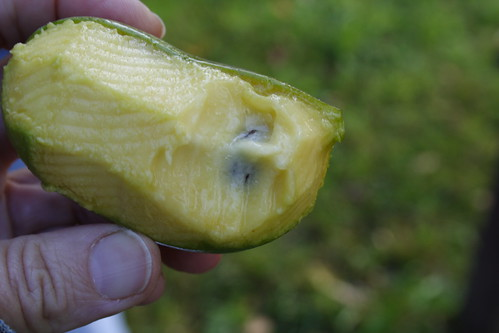 Eating a Pawpaw