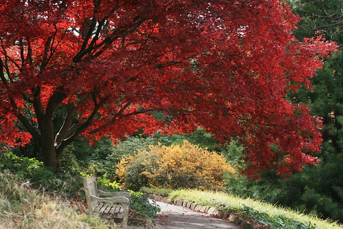Bench under the red maple
