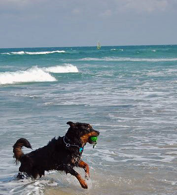 Guinness Playing in the Ocean