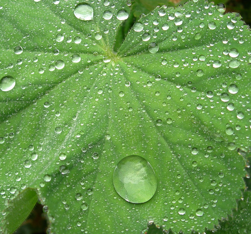 leaf_in_the_rain