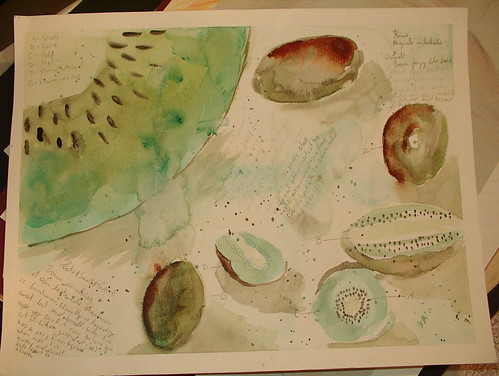 kiwi study