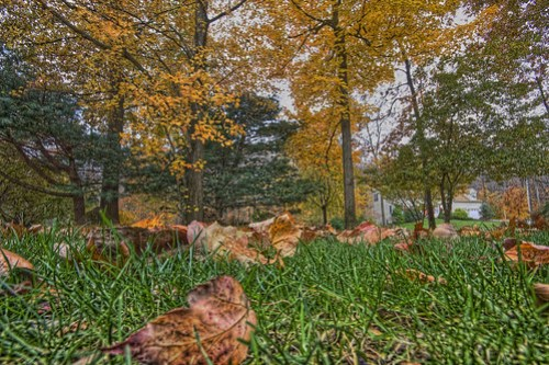 autumn-front-yard-hdr