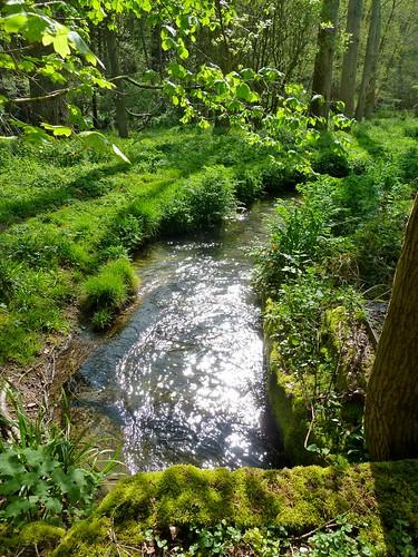 Ashford Stream