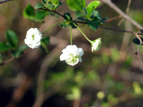 miniture blooms