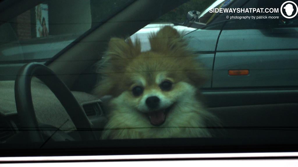 stoked_pom_in_car