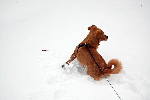 Sleigh doggie