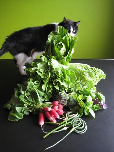 Amelishof organic vegetables week 24, 2011