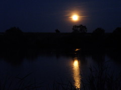 full orange moon reflecting on the pond