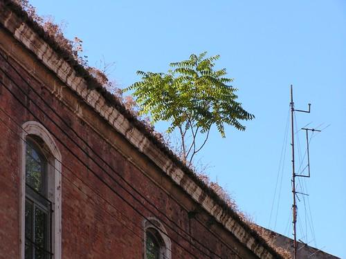 Árboles en el tejado (detalle)