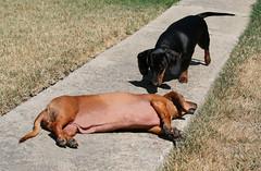 Sunbathing Pepper - Huh?!!?