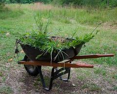 Aquatic Plants for Mulching