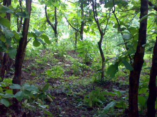 The vegetation