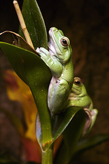 Climbing Frog!