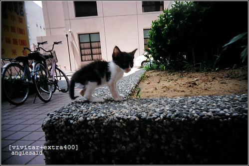 b-20080828_vivitar007_04.jpg