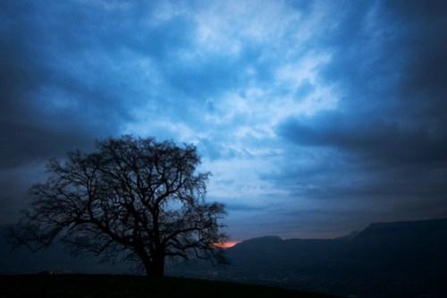 arbre de Venon