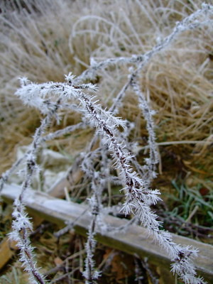 frosted dumped barbedwire