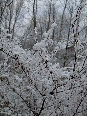 everything is like this - lacy, covered in thick layers of frost and snow. so pretty.