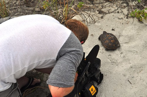 Gopher Tortoise Ready for His Close Up with WBBH (Fort Myers) on Knight Island, Fla.