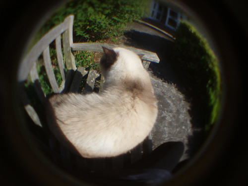 0558, Failed Fisheye 2