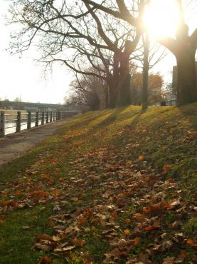 leaves sun