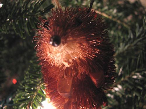 Little Squirrel!