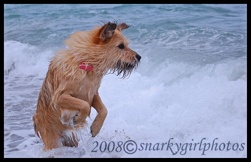Mia standing in the surf