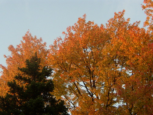 autumn '08