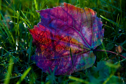 Beautiful Leaf