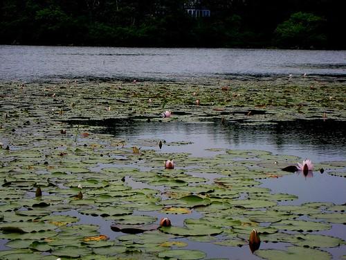 pond at biddeford pool