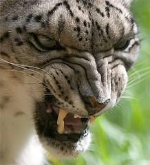 Rough leopard porn