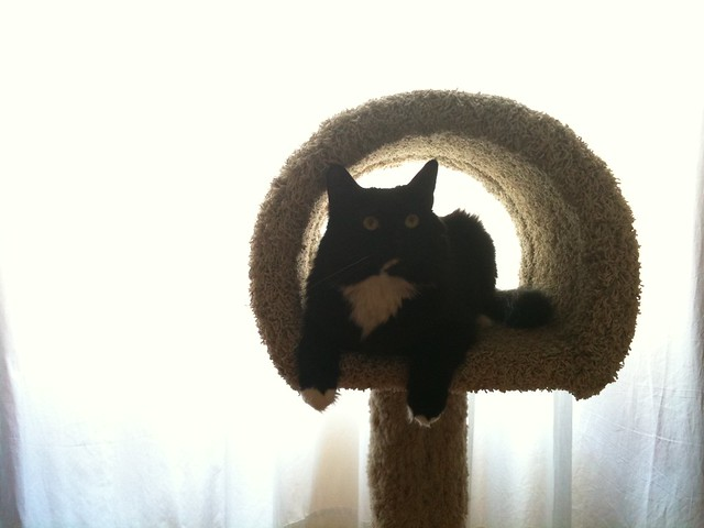 Moby in his tree