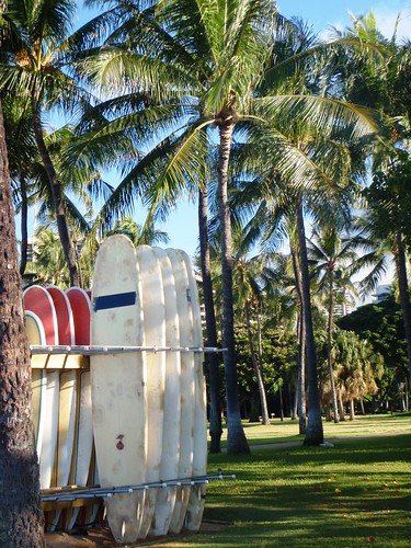 Surfboards and Palm trees